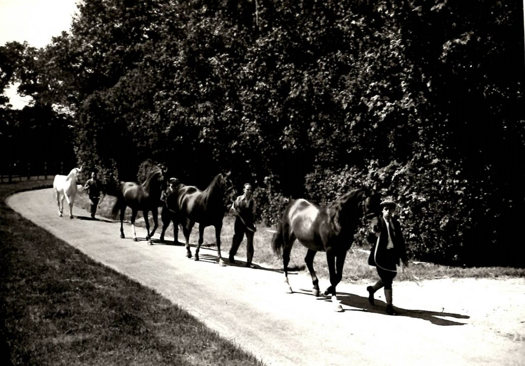 four men leading horses along a country lane