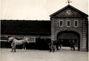Men leading stallions through brick archway