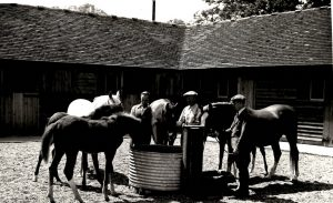 Mares, foals and grooms in stable yard